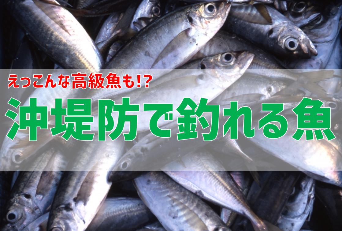 えっ!?こんな高級魚も?沖堤防でよく釣れる魚を紹介
